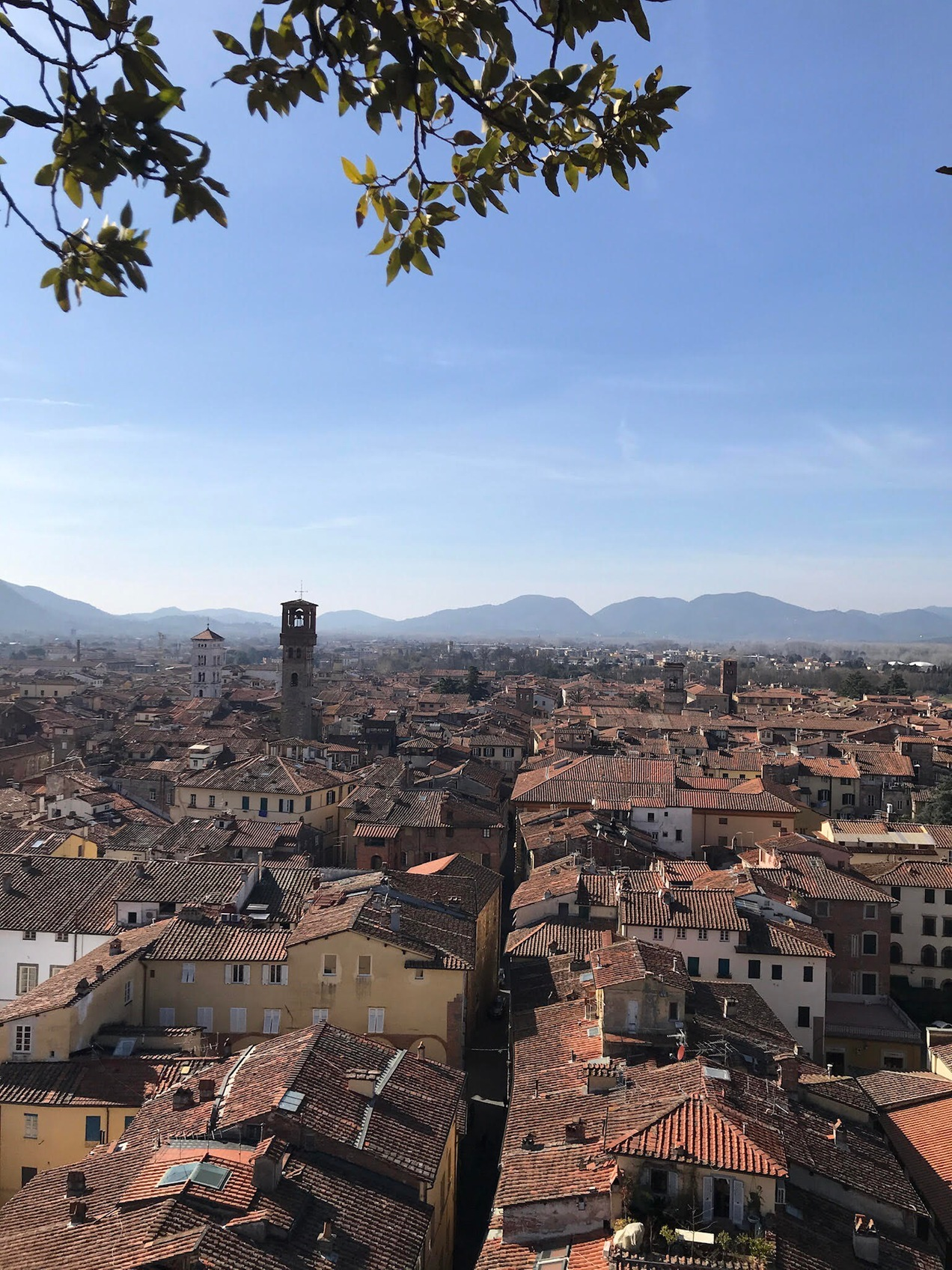 View from Guinigi Tower, Lucca, Italy