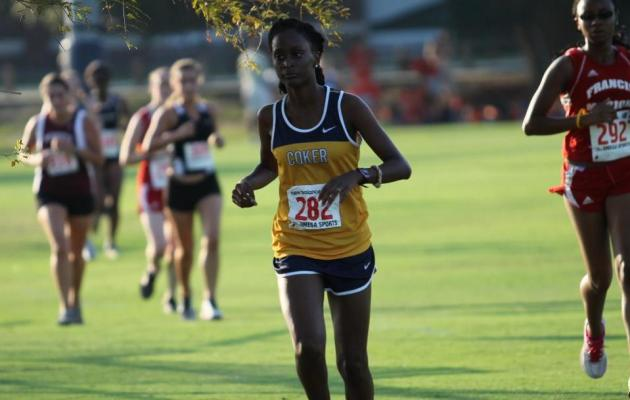 Cobra Cross Country Teams Have Great Showing at Royals Challenge
