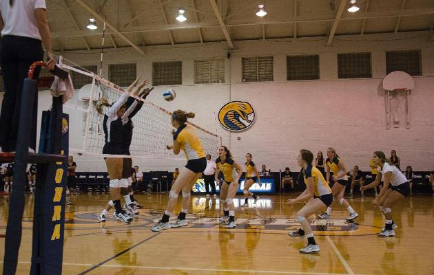Women's Volleyball Set to Host Lenoir-Rhyne and Brevard in Homecoming Doubleheader