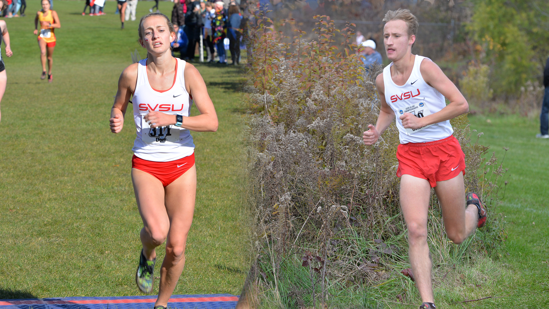 Cardinals head to the NCAA Division II Cross Country Championship Saturday