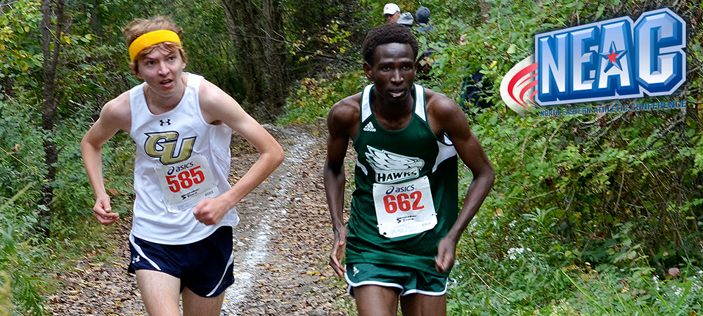 Gallaudet's Kingstedt earns fourth NEAC Men's Cross Country Runner of the Week honor