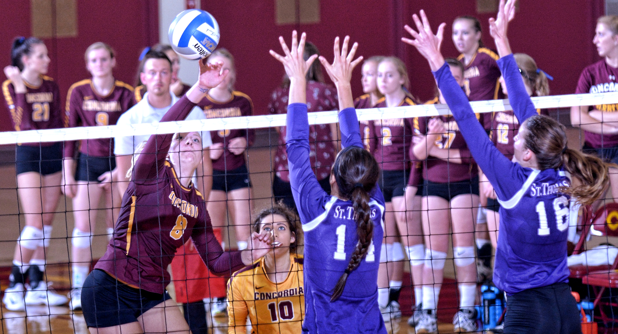 Cobber sophomore Brianna Carney goes up for one of her 11 match-high kills in the MIAC opener against St. Thomas.