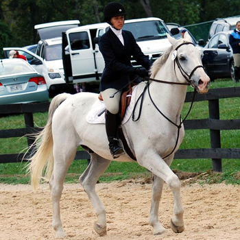 Sixteen Riders Compete in Regional Championships
