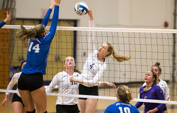 Purple Knights Fall to Regionally-Ranked New Haven in Conference Match
