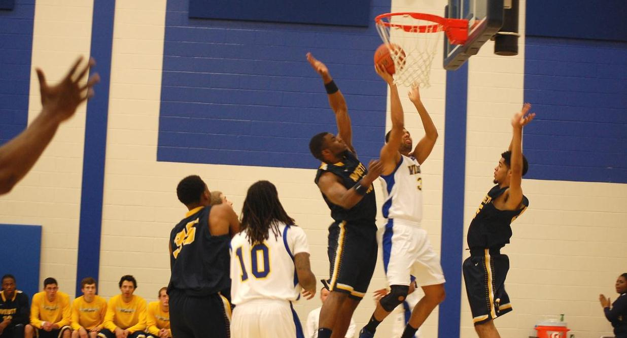 Cats Score Win Over Averett