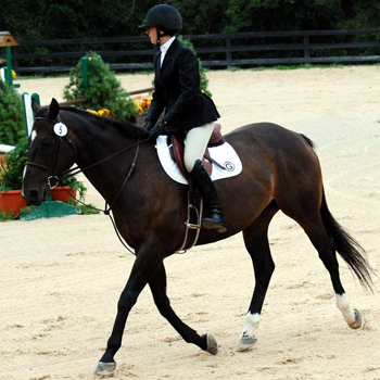 Riding Earns Reserve Championship at Amherst Show