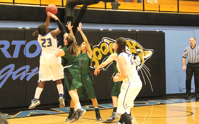 seward cougar women Boys bb: carroll cougars preview  tate oyler and owen seward also are in the mix for playing time  sharpsville woman steals $150,000 from wabash wastewater plant.