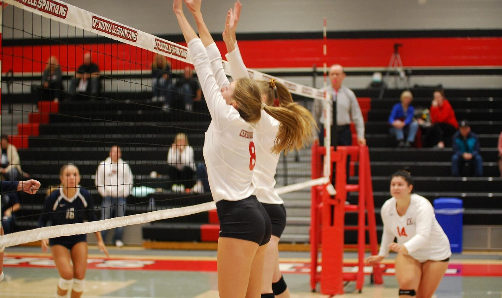 D'Youville Falls to Behrend in Women's Volleyball