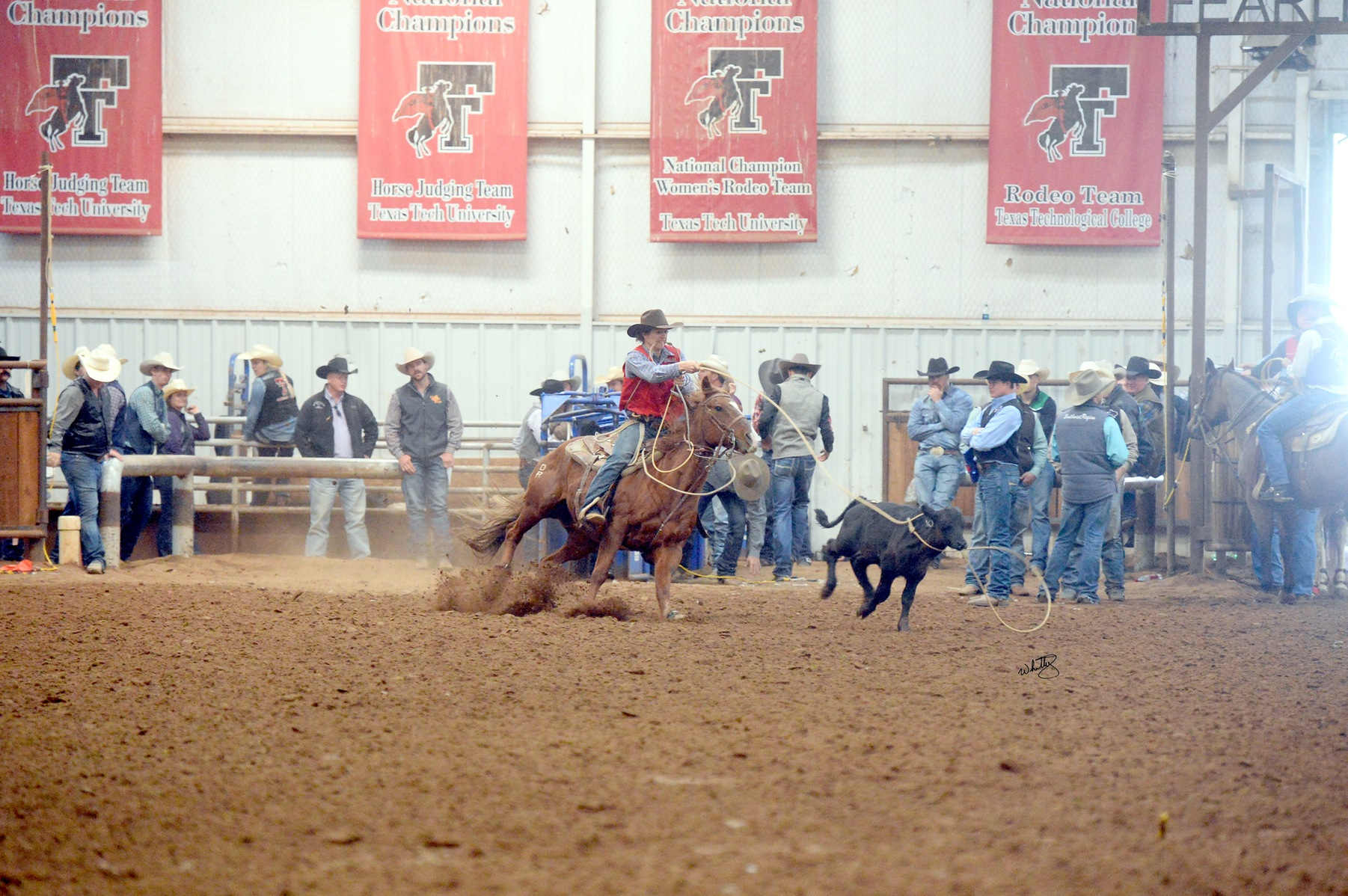 NMJC's Austin Young makes it back to Texas Tech Rodeo Short Round