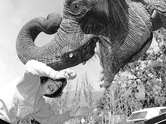Old CSUF photo with an elephant