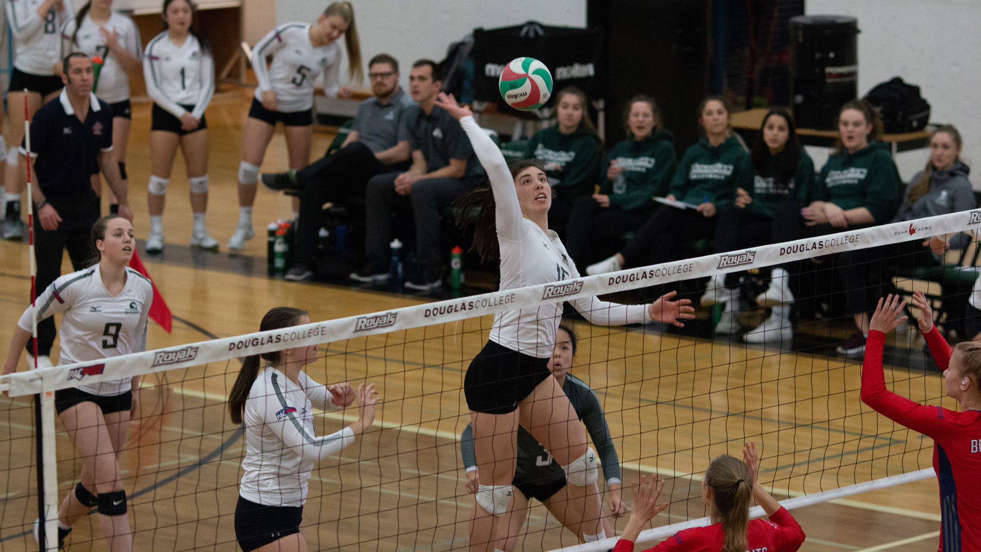 Royals volleyball unstoppable in home-and-away series