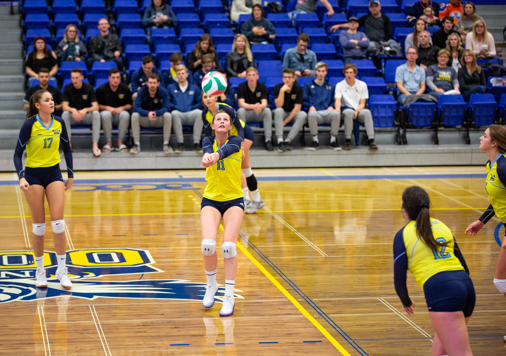 Ooks WVB lose to Wolves 3-1