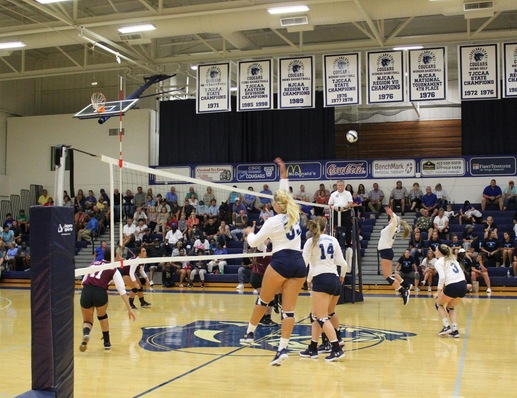 Lady Cougars Take Down Hiwassee in Volleyball Home Opener