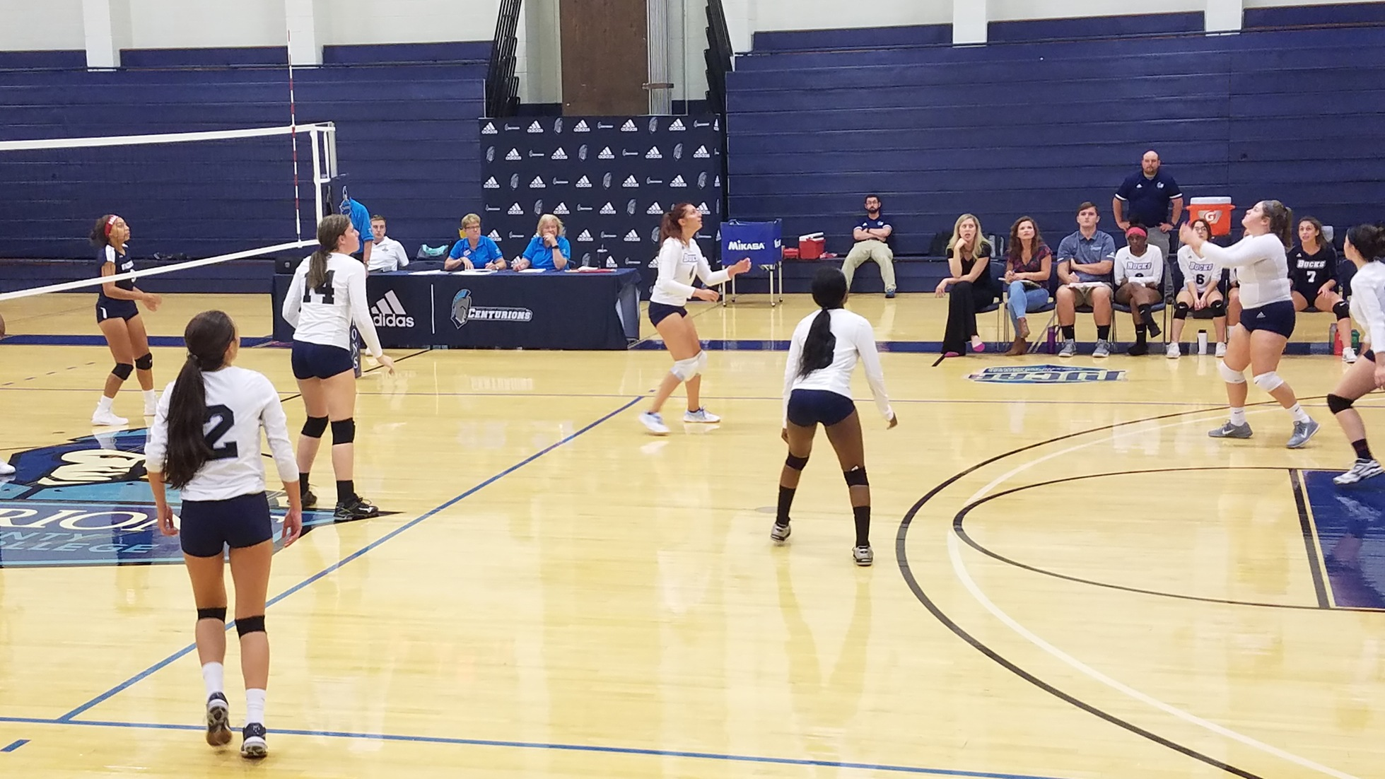 Women's Volleyball: Lose to Lions
