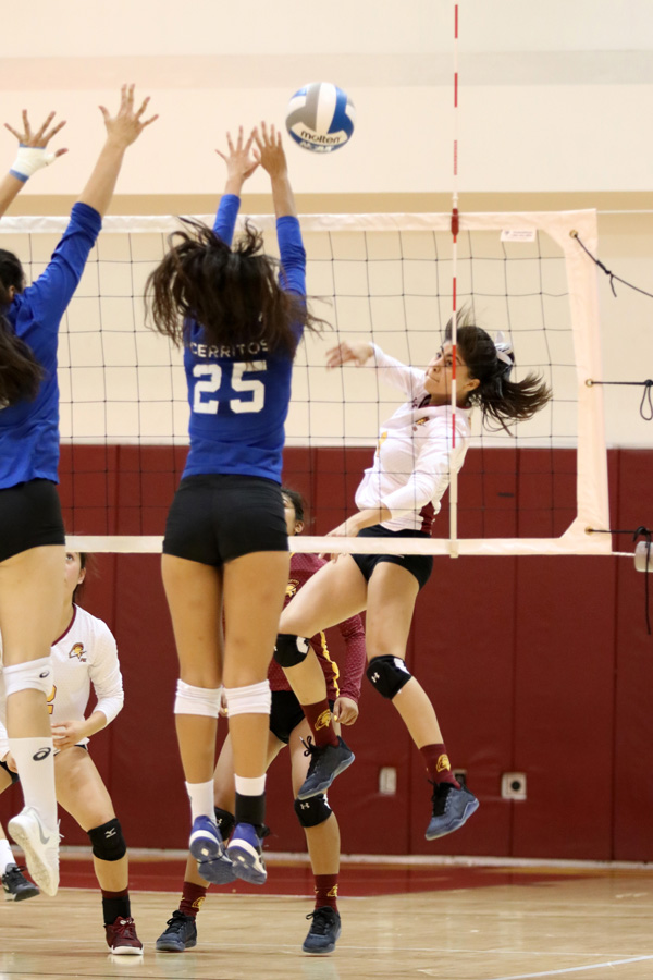 Vanessa Lopez drives a kill during PCC's sweep Friday at Hutto-Patterson Gymnasium, photo by Richard Quinton.