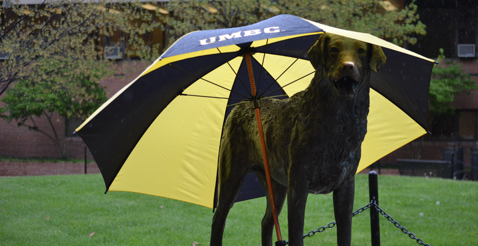 A dual purpose umbrella for True Grit - keep him dry in case of summer storms or keep him cool with scorching summer sun!