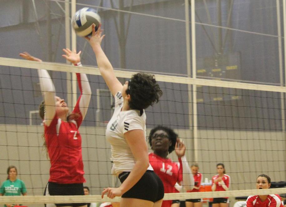 Women's Volleyball Claws Past Lions in 3-0 Sweep