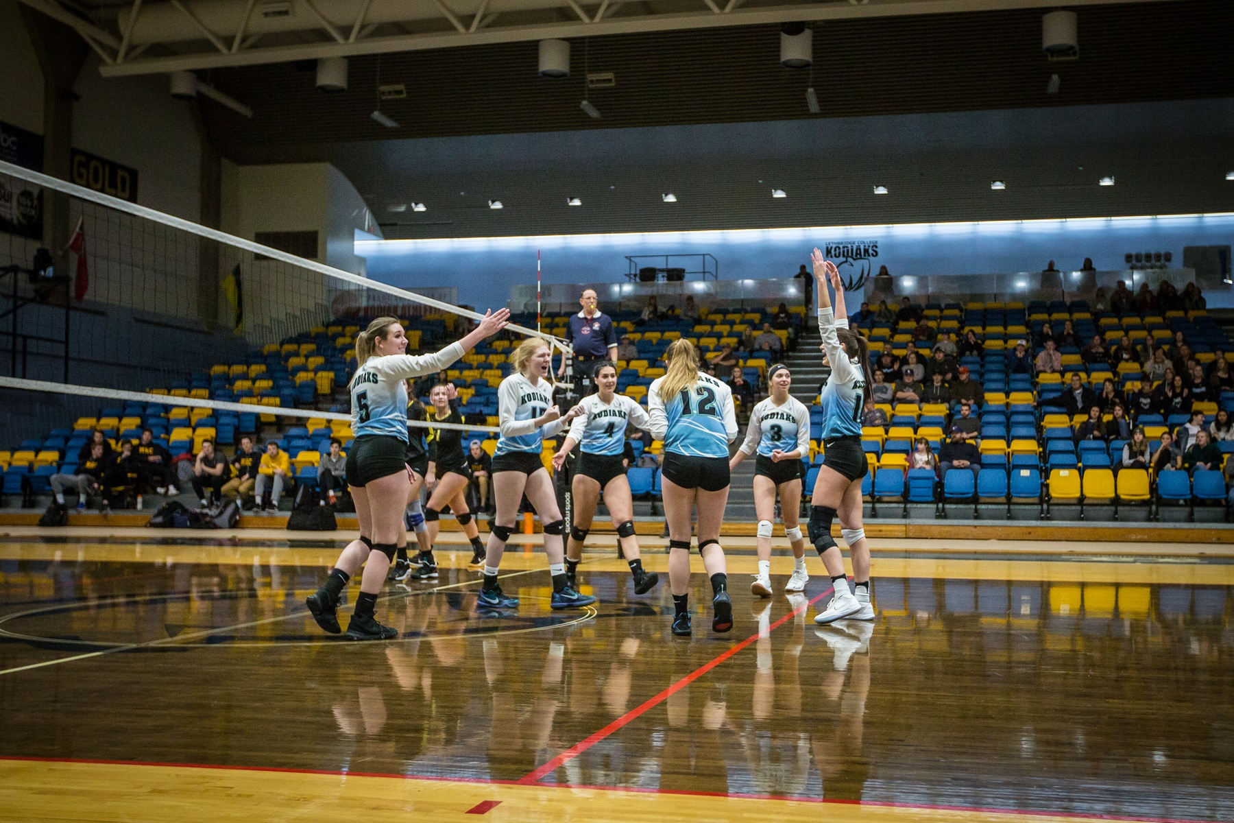 WVB | Kodiaks Fall the the Queens Once Again