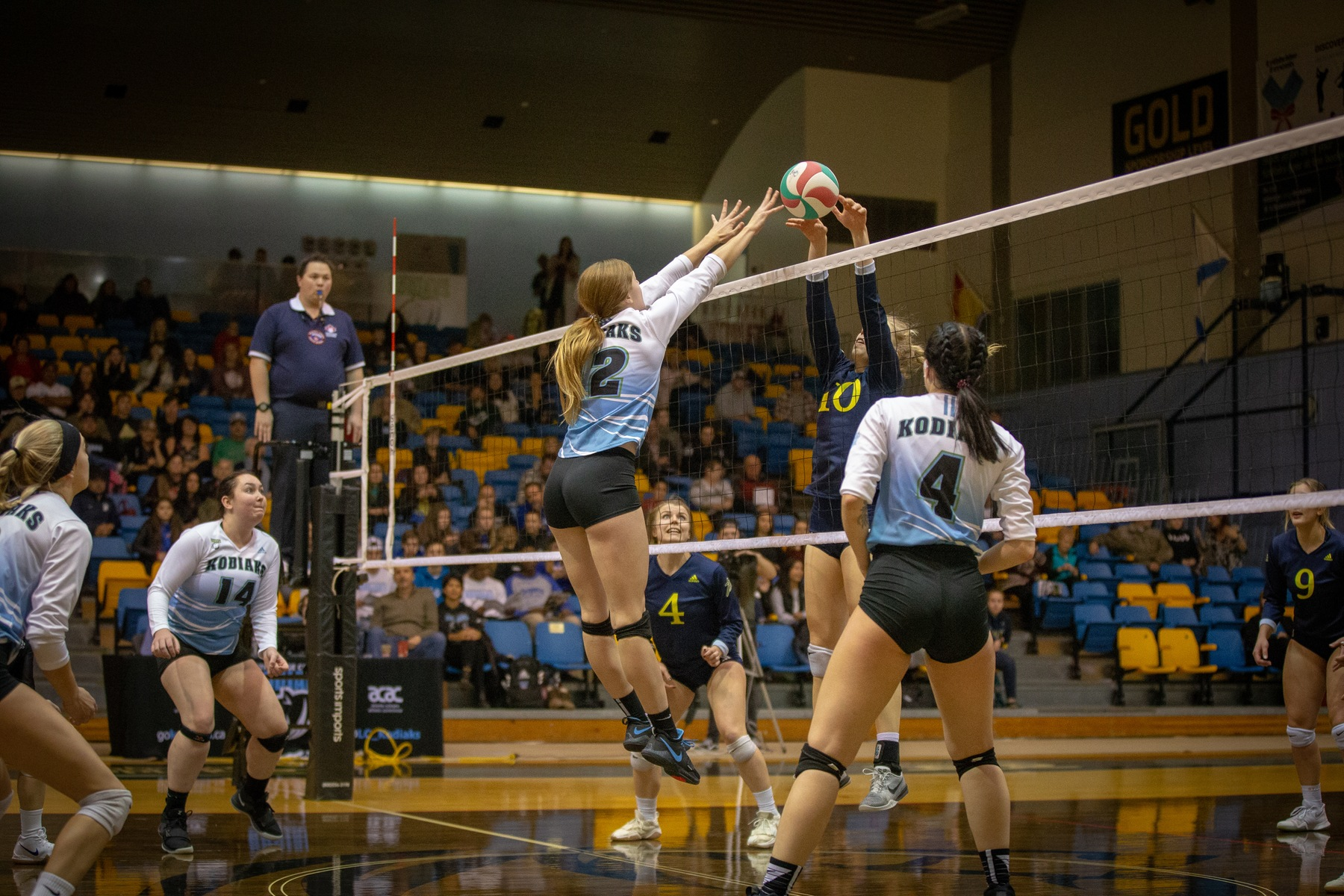 WVB | Clippers Clip Kodiaks in Five