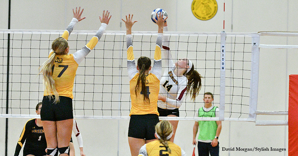 Volleyball Sweeps Curry to Salvage Split