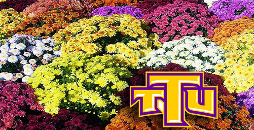 Softball team selling mums; Will deliver on campus
