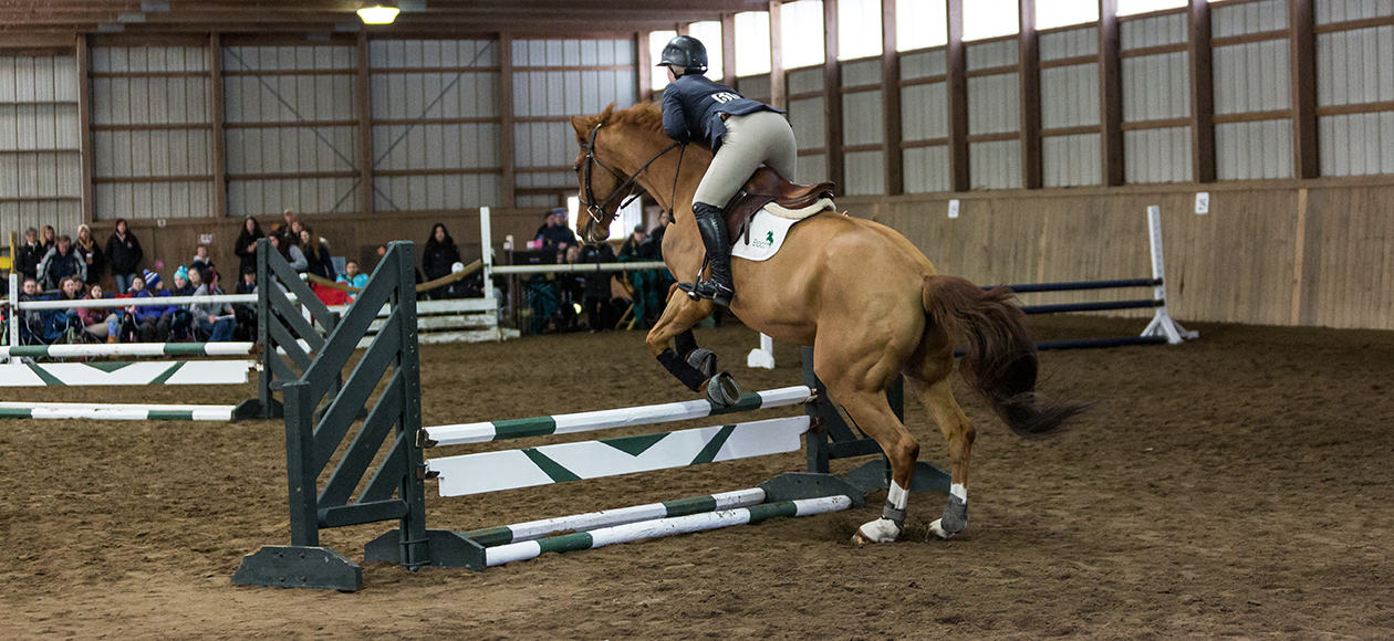 A horse jumps over a jump.
