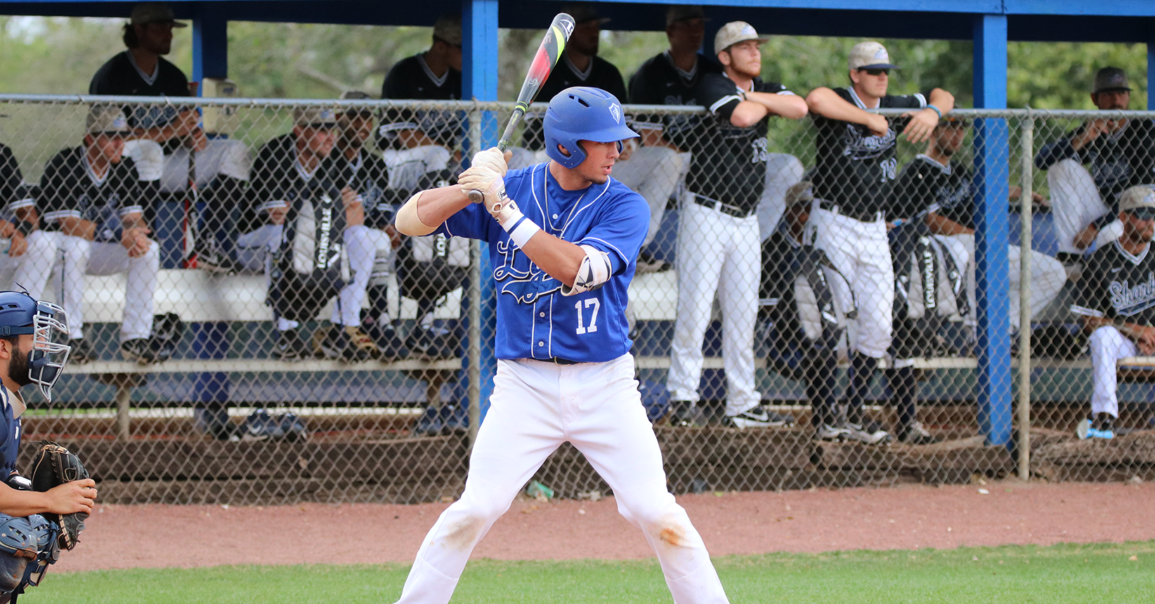 No. 23 Baseball Explodes for Season High in Runs, Hits in Victory Against Owls