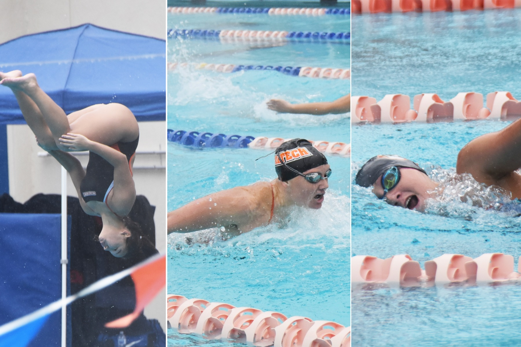Three Members of Women's Swim & Dive Recognized for Scholar All-America